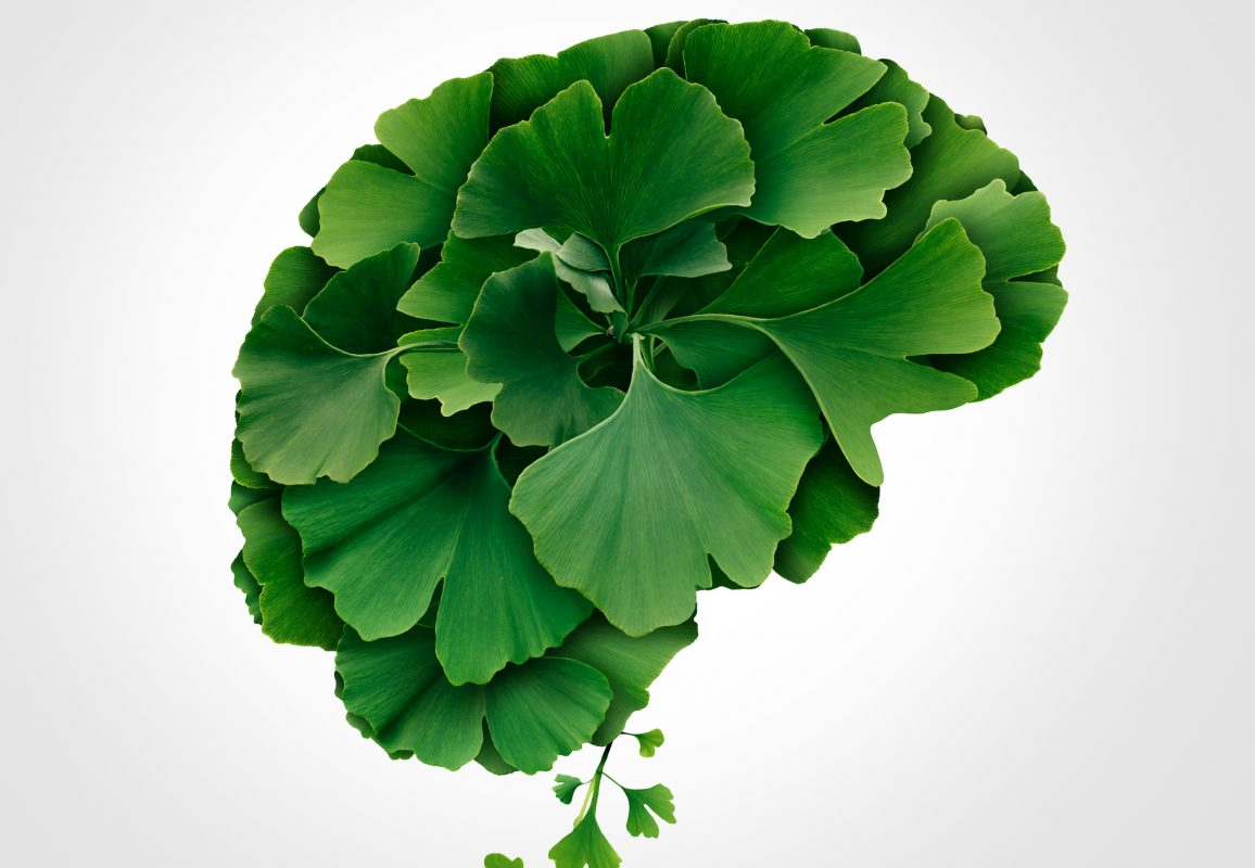 Ginkgo Biloba Brain for memory