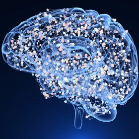 blue brain on nootropics L Tyrosine