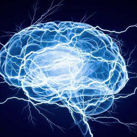 blue brain on L-Tyrosine